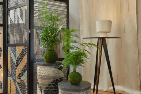 Kokedama - Art végétal japonais - Décoration intérieur 1