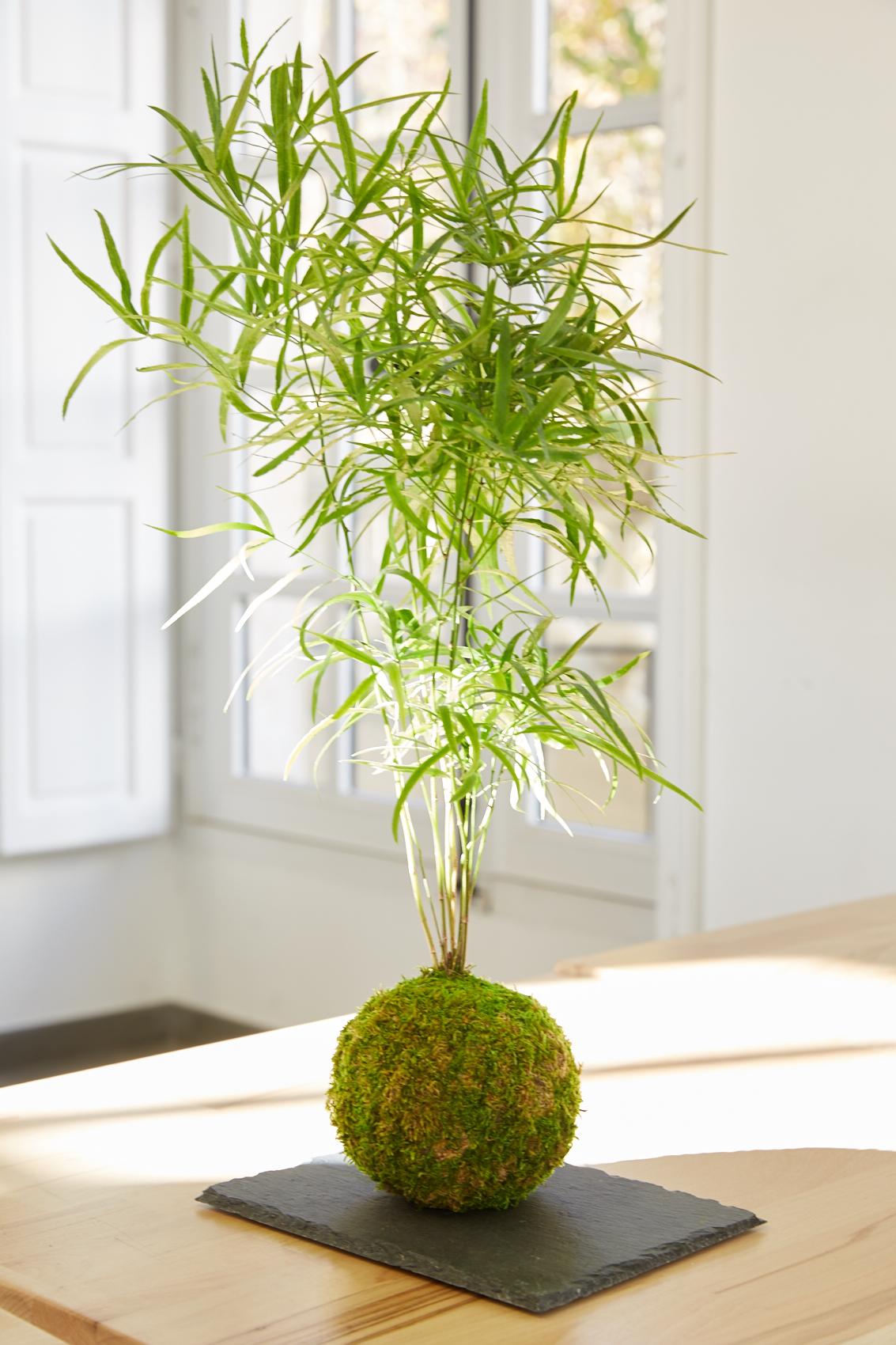 kokedama - escapade vegetale